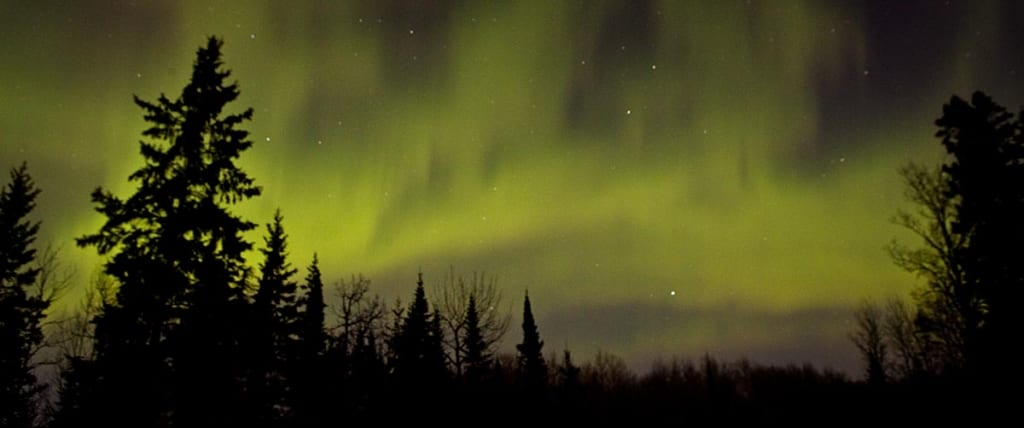 Northern lights over forest.