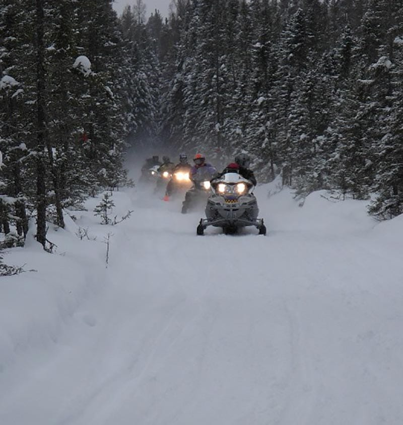 Group of snowmobilers on forest path.