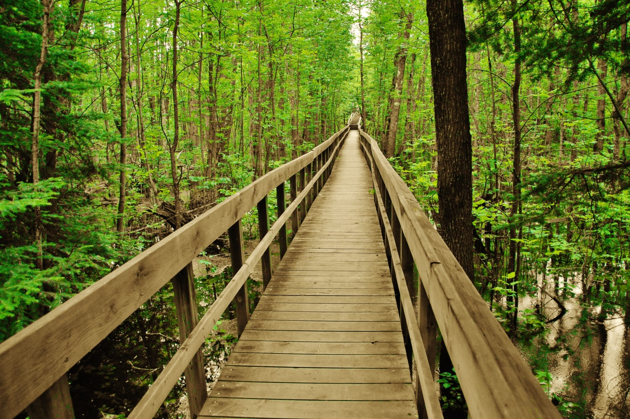 Wooden walkway in forest.